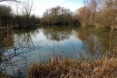 Brandon Marsh, Swallow Pool (kestrel49) Tags: uk england europe britain naturereserve gb 12 warwickshire 2012 brandonmarsh brandonmarshes