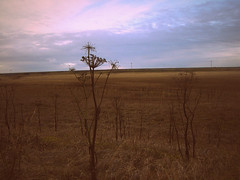 (ManonMK) Tags: travel sunset plant field grass landscape iceland view dusk