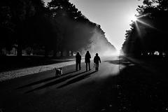 through the haze darkly (zip po) Tags: park morning dublin fog haze