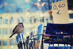 the Berlin bird (-justk-) Tags: berlin germany bokeh sparrow postcards