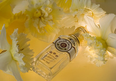 Eau de Cologne (Wendy:) Tags: stilllife glass floral yellow 50mm bottle perfume narcissi daffodils productphotography rogergallet tp862
