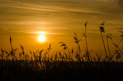 Silhouettes at Sunset (Lee532) Tags: uk sunset sun water silhouette river star nikon south north lincolnshire humber ferriby d5100