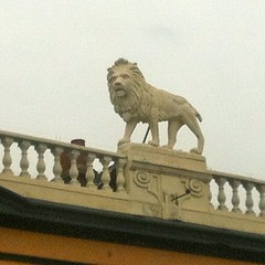 """Lion • <a style=""""font-size:0.8em;"""" href=""""http://www.flickr.com/photos/89972965@N03/14082753673/"""" target=""""_blank"""">View on Flickr</a>"""