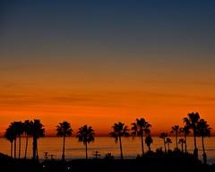 112714-628F (kzzzkc) Tags: california sunset usa tree silhouette nikon sandiego horizon palm pacificocean pointloma d7100