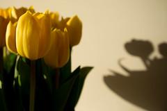 Viewfinder-6 (sven.vansantvliet) Tags: blue shadow sky flower colors yellow fleurs jaune drops weide couleurs schaduw geel bloem druppel tulp kleuren tullip paardebloem boterbloem pisbloem lentebloesembloemenbijhuis