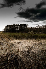 reeds (ilovecoffeeballarat) Tags: trees light sky art texture grass reeds landscape horizon shade