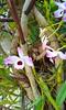 20150821_125549 - Cópia (Megaolhar) Tags: flores toy flickr do dia vale paulo apa bom inverno são campos facebook tuka jordão paraíba fazendinha 2016 youtube ibama twitter jardinagem bioma gomeral