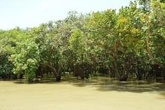 lac tonle sap - cambodge 2014 18 (La-Thailande-et-l-Asie) Tags: cambodge lac tonlsap