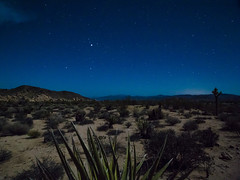 36. Under the Stars (Duenas007) Tags: above blue wild cactus sky west tree night stars photography succulent flora long exposure desert joshua dirt astrophotography below succulents lanscape
