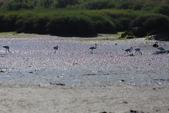 Moiss Santiago  (2) (Moiss Santiago) Tags: santiago de flamingo moises moinho mar corroios moisessantiago 01062016