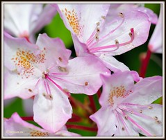 _JVA6811 (mrjean.eu) Tags: park pink flowers blue red roses white france flower macro green nature fleur rose yellow fleurs nikon botanic lorraine botanique parc metz communal 105mmf28