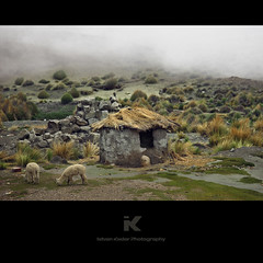 Little Mud-hut in the Andes (fesign) Tags: mist alpaca peru animal animals fog landscape hovel lodge hut andes shanty chivay hootch tumbledowncottage pampacañahuasnationalreserve