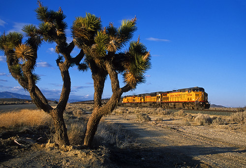 Passing a Joshua tree