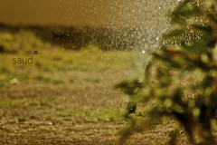 watering the thoughts,,, (Iamsaud ) Tags: green water drops thought away here thoughts be