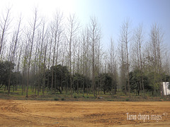 IMGj_0487 (Tarun Chopra) Tags: travel trees landscape farming gurgaon s100 powershots100 canonpowershots100