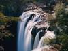 Falling Water (pantha29) Tags: trees newzealand waterfall olympus drop northisland e3 zuiko fallingwater waterpool poolofwater gushingwater beautifulsetting 1260mm