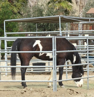 Horse in Live Oak Canyon, Redlands, CA 2-2012
