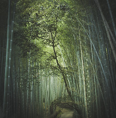 (skidu) Tags: trees light green nature leaves japan forest canon square kyoto path sigma bamboo arashiyama sagano 1x1 30mm 550d t2i