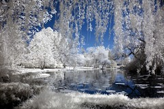 On Willow Pond IR (TexasTea) Tags: anawesomeshot bratanesque bravo infrared ir lyndenwa outstanding outstandingshots pond searchthebest shots sky superhearts topf50 tree willowtree