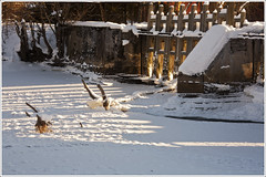 20120209. Kabala. Vigala river. 3339. (Tiina Gill (busy)) Tags: winter snow water river frozen dam kabala estoni vigalariver