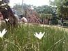 intip anak kecil main pasir (daEsUke_cHan) Tags: background jakarta ban taman anak lucu daun fotografi pemandangan kecil fotofoto burung menteng penghijauan kumpulkumpul rangkabunga