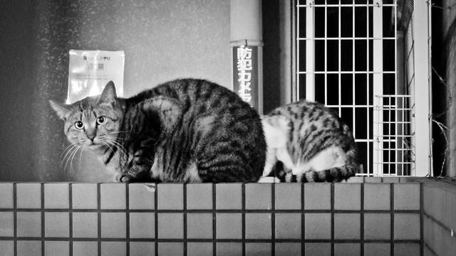 Today's Cat@2012-03-10