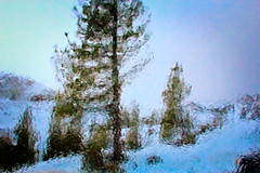 Winter (San Francisco Gal) Tags: winter sky snow tree nature pine canon february 2012 jeffreypine