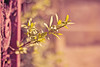 Reaching {Explored} (Grace5mith) Tags: wood ireland plant macro metal closeup canon fence 50mm leaf rust branch explore twig northernireland explored i500 canon600d interestingness3004204