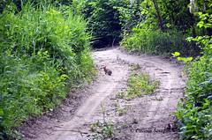Hare. (Ottavia Serafini) Tags: rabbit animals hare campagna animali coniglio lepre leprotto