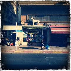Dog on the roof.