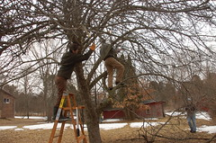 "Apple Pruning Party <a style=""margin-left:10px; font-size:0.8em;"" href=""http://www.flickr.com/photos/91915217@N00/13528223565/"" target=""_blank"">@flickr</a>"