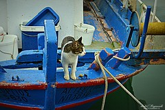 captain pussy cat...on board... (Dimitra Kirgiannaki .*spring-lover ) Tags: blue sea cats colors animals boats greek photography greece april hdr 2014 dimitra floisvos palaiofaliro ni
