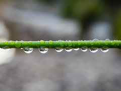 P4200184 (Brad.S.Cook) Tags: morning light macro sunrise droplets