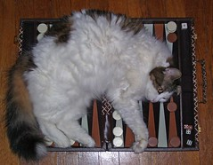 (C. Neil Scott) Tags: cat feline southcarolina foo backgammon columbiasc foofoo cedarterrace
