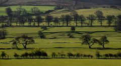 Fields of green (images@twiston) Tags: morning trees shadow tree green field grass lines silhouette fence landscape countryside branch sheep branches hill meadow silhouettes row farmland lancashire line hedge fields layers sunlit moor grassland depth silhouetted palette variable moorland hedges pendlehill pendle aonb layered hedgerows treelines ribblevalley forestofbowland fieldsofgreen mearley mearleyhall