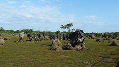 Coral garden (forzarwe) Tags: africa coral island lumix kenya panasonic tropical afrika southcoast kenia mombasa wasini wasiniisland coralgarden