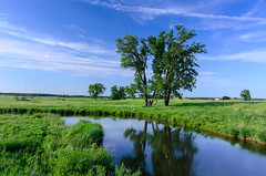 the peaceful prairie (contemplative imaging) Tags: park blue trees sky bw usa hot reflection green nature water grass june clouds digital rural america creek landscape photography countryside photo illinois spring nikon midwest stream meditate day natural district peaceful il glacier tokina ill american area serene meditation prairie friday contemplative contemplate preserve 32 cpl 2x3 glacial partlycloudy nippersink 2016 midwestern mccd d7000 contemplativeimaging ronzack mchenrycounty tok1228f4 atxpro128afdx cigpca20160603d7000135 atx1228afprodx cigpca20160603d7000 glacialpark