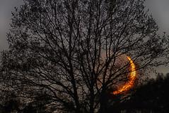 LvdH (2182) (Lex van der Holland) Tags: moon tree night moonlight