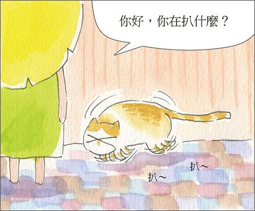 家裡來了一隻貓 愛乾淨的貓