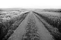 uncertain future (joachim.d.) Tags: field europa europe felder direction aim weg richtung getreide naheland odernheim 24062016