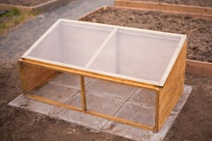 cold frame in situ