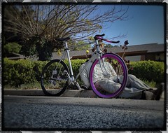 "My ""Darlin' "" Fixed Gear (junglistic1) Tags: art bike wheel cycling ride purple cycle fixed fixie deadguy maxway"