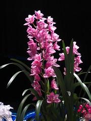 IMG_2167 (Amatourist) Tags: flower philadelphia philly flowershow