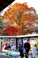 (MADDUX99) Tags: japan maple scenery kyoto momiji     kansai     actumn