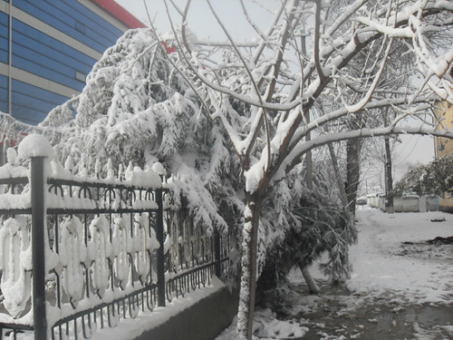 Последствия снегопада в Курган-тюбе (16)
