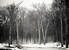 A Continuing Love Affair.... (negra223) Tags: trees winter light blackandwhite bw snow cold nature rain horizontal misty fog outside rising grey frozen geese pond day shadows bare branches feel ground passion mylove continuing loveaffair nicepeople realizing negra223 negrasphotography