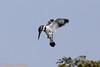 IMG_5715L (Sharad Medhavi) Tags: bird canoneod50d mangomistresortkarnatakastatehighway87