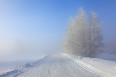 Road to work (Barry_Madden) Tags: road trees winter snow cold tree ice fog suomi finland foggy freezing