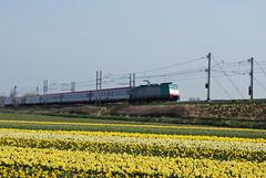 Benelux met Öbb rijtuigen (Jor[D]1) Tags: ns bollen trein nsr voorjaar obb nederlandsespoorwegen