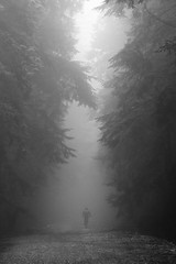 2012_02_Fromme_0666 (Dustan Sept) Tags: bw bicycle fog vancouver forest shore expresso mountainbiking fromme
